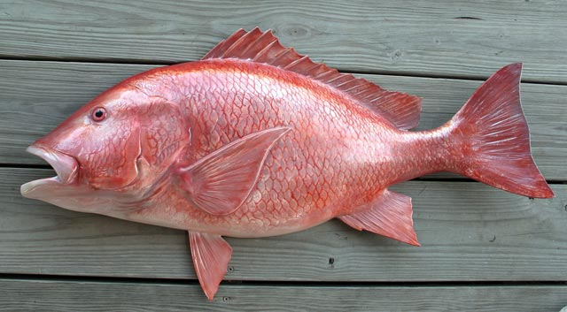 The Gulf States Plead With Their Federal Masters to Extend Red Snapper Season